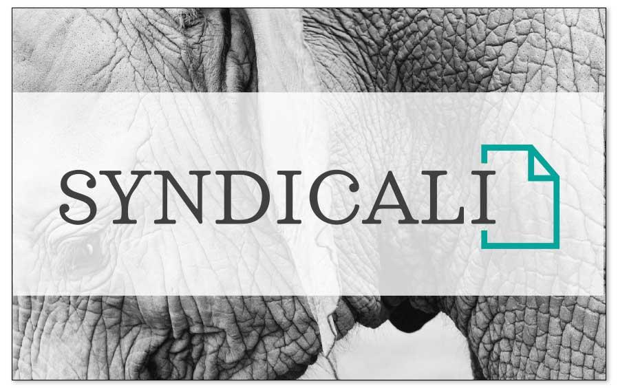 Identidad visual, ejemplo de Syndicali